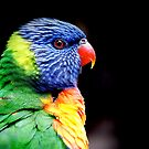 Lorikeet by Angela Stewart