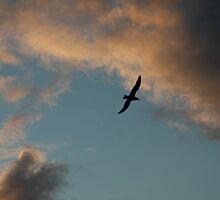 Skies as I cycle home by Leila  Koren
