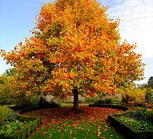 Autumn Glory by Angela Ward-Brown