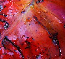 """""""Fallen Colours"""" by debsphotos"""
