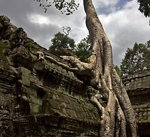 Ta Prohm Trees by Marylou Badeaux