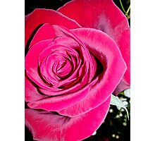 Lovely Red Rose Photographic Print