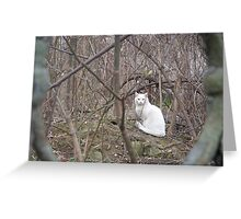 Whiteness in the Thicket Greeting Card