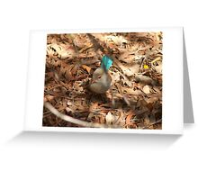 Female variegated wren Greeting Card