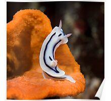 Nudibranch on sponge Poster
