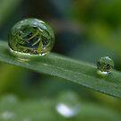 Green reflection by Yool