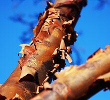 Scabby Tree by Richard Hanley www.scotland-postcards.com