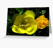 Evening Primrose and Bud Greeting Card