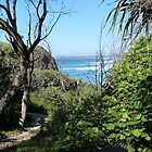 Track to Fingal Head Lighthouse! Kingscliff, N.S.W. Nth. Cst. Aust. by Rita Blom