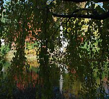 mt auburn cemetery - weeping tree by colleenboston