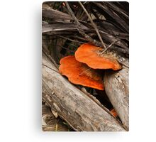 Speared Fungi Canvas Print