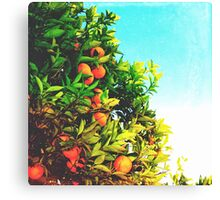 Ohh La La Oranges Canvas Print