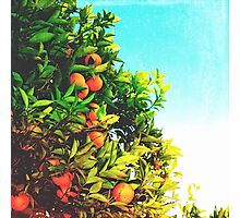 Ohh La La Oranges Photographic Print