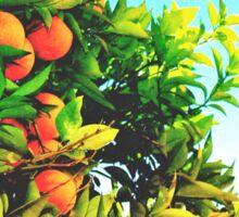 Ohh La La Oranges Sticker
