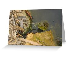 Hello Mr. Frog Greeting Card