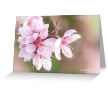 Peach Blossom Peace Greeting Card