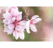 Peach Blossom Peace Photographic Print