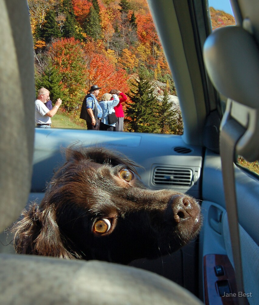 Dog's View by Jane Best