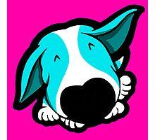 Big Nose Bull Terrier Puppy Aqua Photographic Print