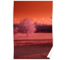 Infrared Tree Poster
