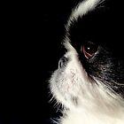 Daisy's Profile by Eileen Brymer