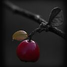 autumn berry  ... just for Marcy by SNAPPYDAVE