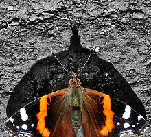 Red Admiral by A90Six