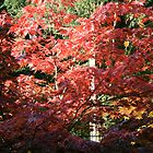 Autumn Red by Iani