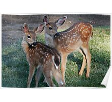 Fawns with spots - 1874 Poster