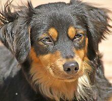 puppy by David Pond