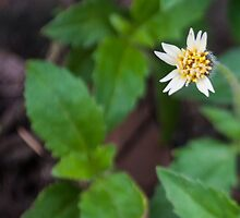 Lonely white by Cropfactorgroup