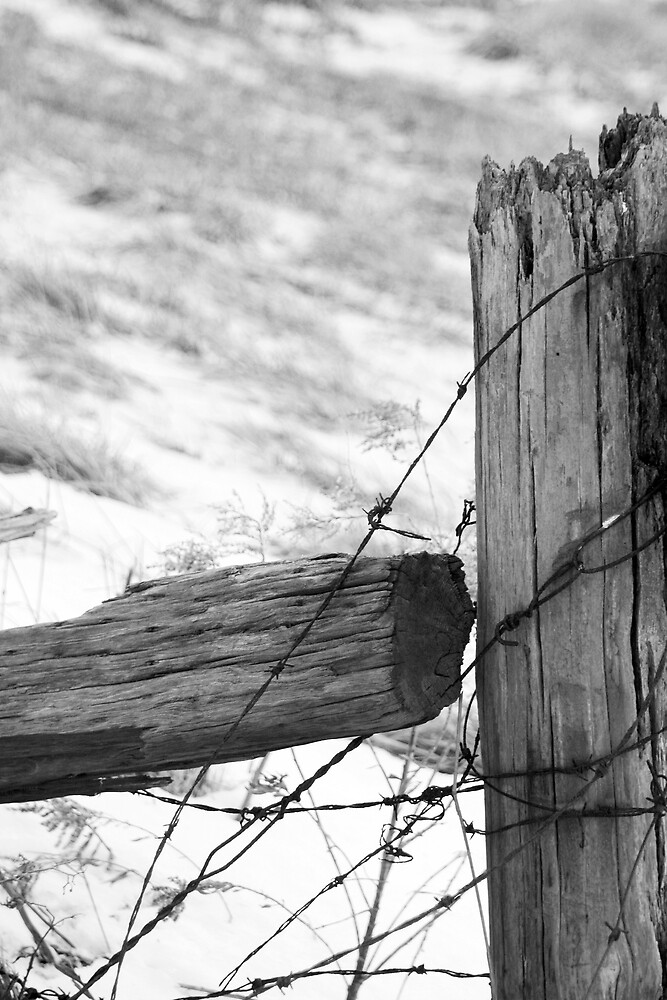 Old Fence by Kelly Hopkins