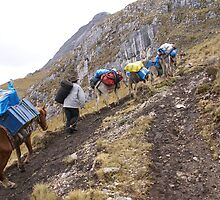 Mule train, carrying loads in high mountains by cascoly