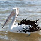 Content Pelican by mariajd