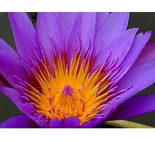 Cambodian Flower Photographic Print