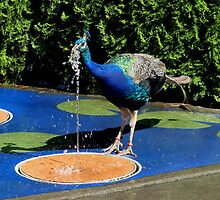 Peacock Fountain by Marvin Hayes