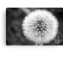 Seed Ball Canvas Print
