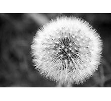 Seed Ball Photographic Print