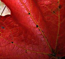 Turning Leaf 2 by Dan Perez