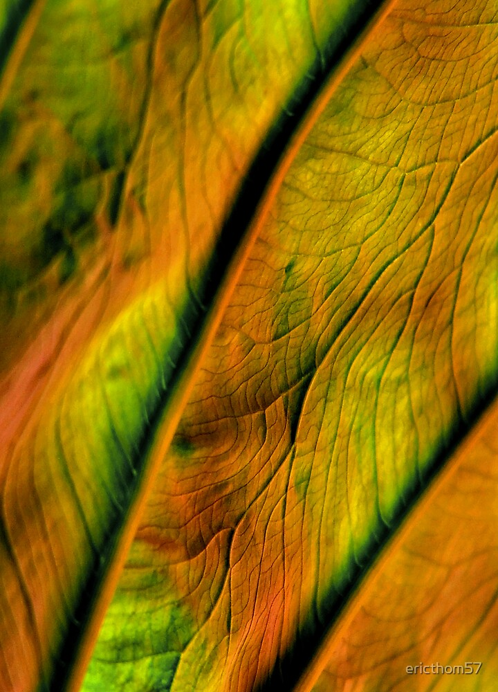 Leafscape by ericthom57