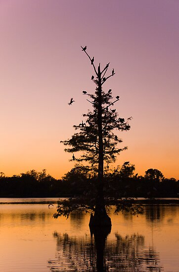 Roosting Tree by Bonnie T.  Barry