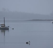 wet day at Triabunna by gaylene
