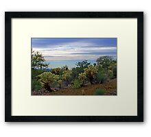 Cholla Cacti in the Desert Framed Print