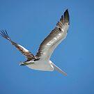 birds #21, flight in light by stickelsimages