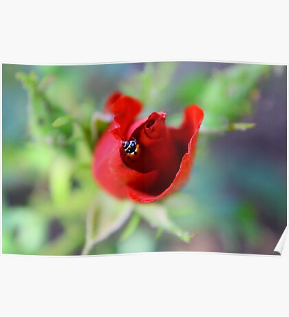 Lady Bug Hide Out Poster