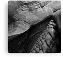 Scales of a giant tortoise - photograph Canvas Print