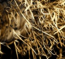 Neon Grevillea in Sepia by Lesley Smitheringale