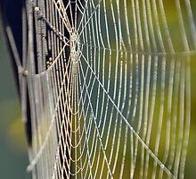 web by Gerhard Brandhofer