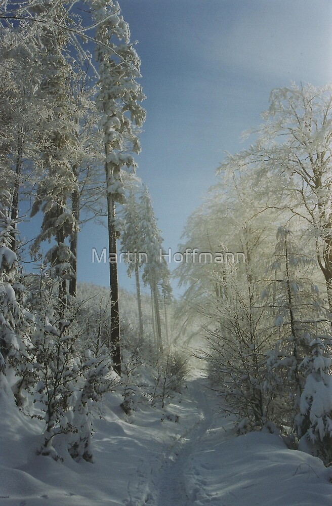 Winter Walk by Martin  Hoffmann