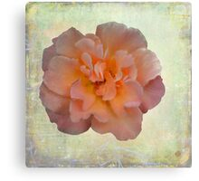Beauty Captured Canvas Print
